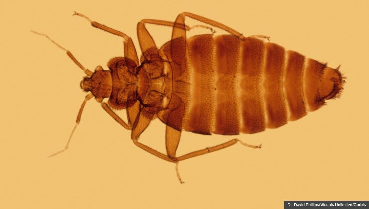Bed bug extermination is a real problem, but so are scammers out to make money off the pests. For Scam Alert.
