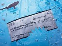 Un cheque y un tiburón en agua