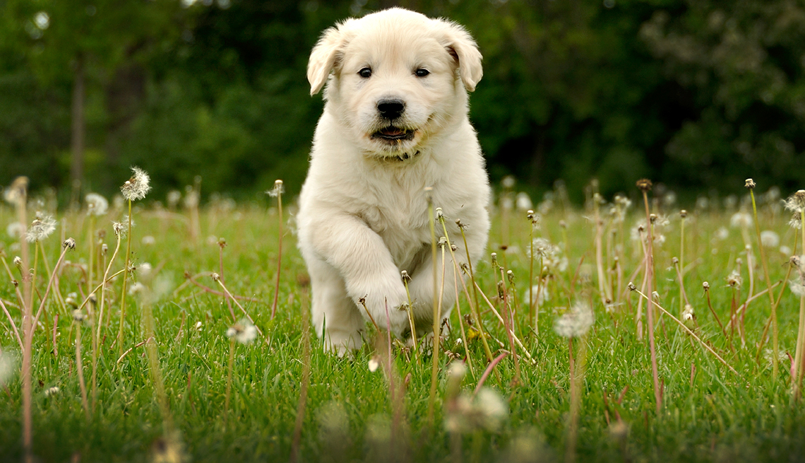 Scams to Avoid -  Puppies