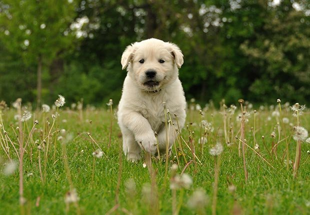 Avoid scams, puppies may be stolen. (iStock)