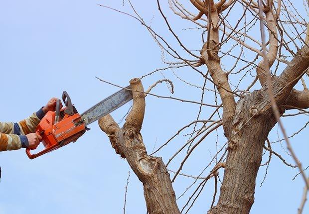 Evita el fraude de podadores de árboles no solicitados
