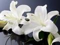 Lirio, Alerta de Fraude: Estafas Fúnebres