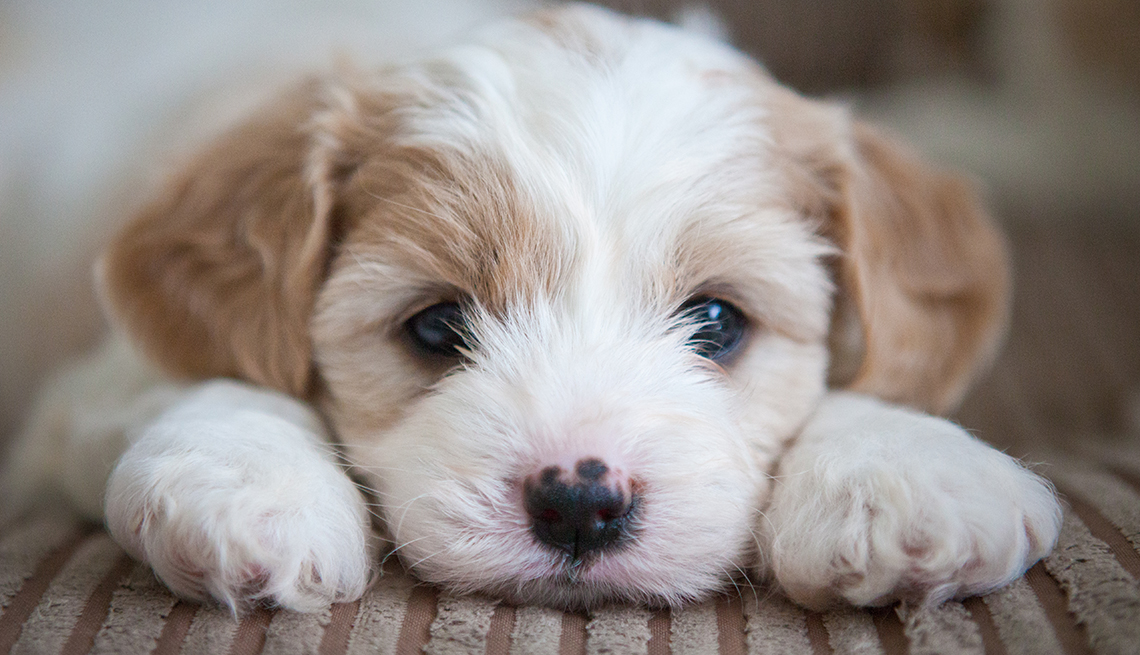 Beware of Puppy Scams During the Holiday Season