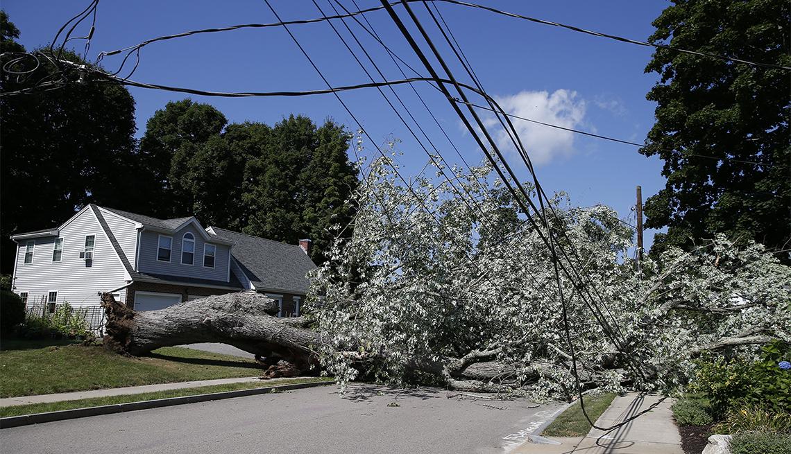 Árbol caído sobre líneas de energía en Waltham, MA, después del paso de la tormenta tropical Isaias. Agosto 5, 2020