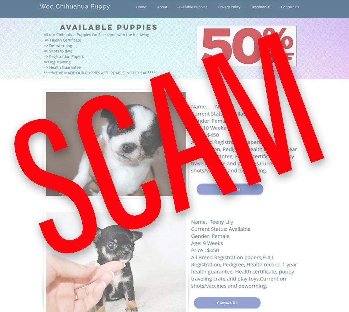 Captura de pantalla de una web falsa llamada lovelyhappypuppy.com con un letrero encima que dice fraude