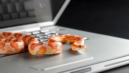 Serpiente en un computador portátil, Consejos para prevenir el fraude fiscal