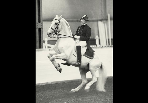 An Austrian dressage rider (possibly Oscar Swahn) trains in Vienna for the 1936 Olympic Games in Berlin.