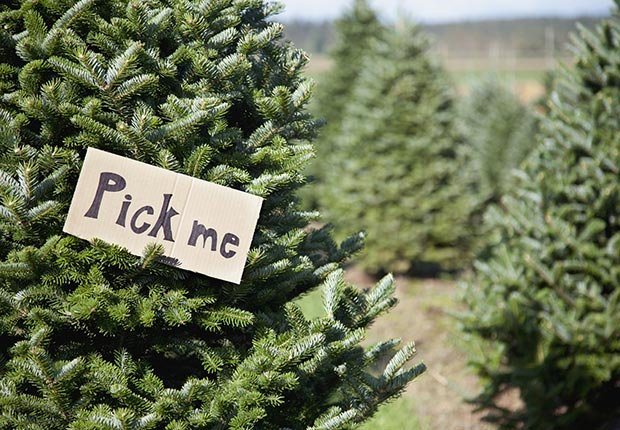 Tree farms and other Christmas Crazes of the past.