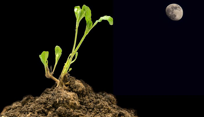 10 Skills Our Kids Will Never Learn  -  How to plant vegetables by the phase of the moon.