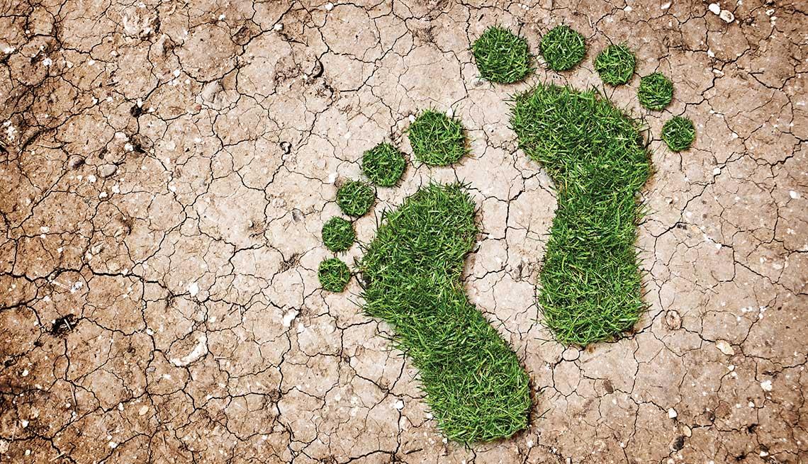 Huellas verdes de hierba sobre terreno reseco