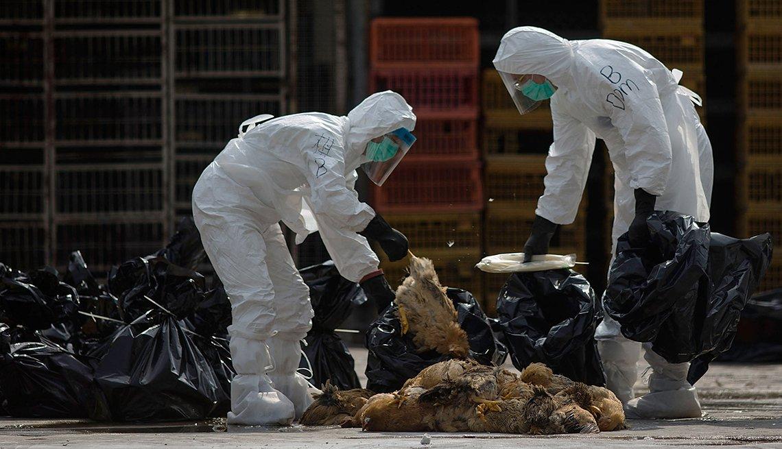 Empleados trabajando para contener la gripe aviar
