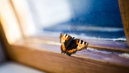 A butterfly tries to escape through a closed window- where is heaven on earth