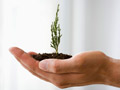 A seedling growing in a person's hand.