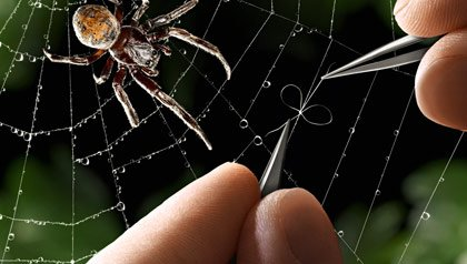 A person fixes a spider's web.