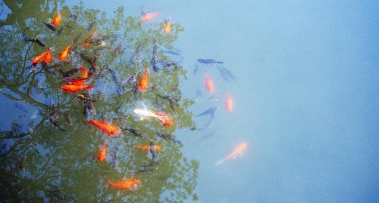 Peces en un acuario