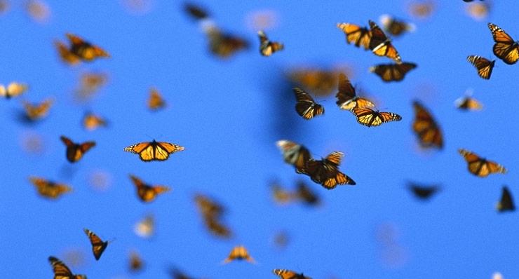 Mariposas como representación de la existencia de los milagros