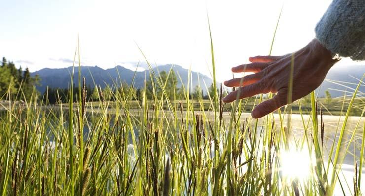 Pasto alto como representación de la existencia de los milagros