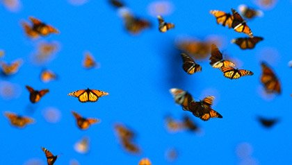 Butterflies in Mexico representing belief in miracles
