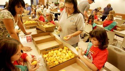 Girl Scouts: voluntarios y las Girl Scouts trabajan separando unas frutas ayudando a la comunidad latina