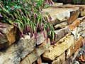 Stone wall built by AARP colleague George Blooston