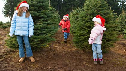 family activities during the christmas season- three children run through a christmas tree farm