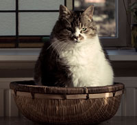marty becker on fat pets, large cat in basket
