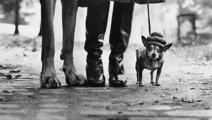 are you dog savvy?- two dogs stand on the sidewalk with a woman