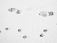 Dr. Marty Becker: 5 Things About Dog Walking