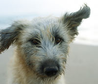Shaggy dog on the beach