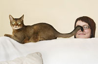 Burmese cat on a sofa with tail on womans face.