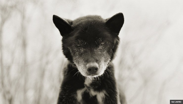 Black and white portrait of dog at age 19