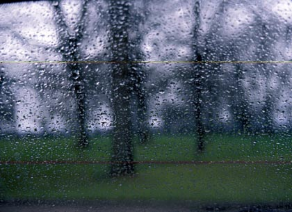 view of trees through heavy rain
