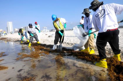 Trabajadores limpiando la mancha de petróleo en el Golfo de México