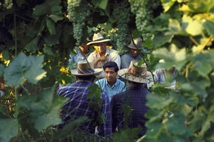 César Chávez (c) talks with grape pickers about the United Farm Workers union on March 1, 1968.