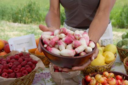 Holding bowl of organic radishes