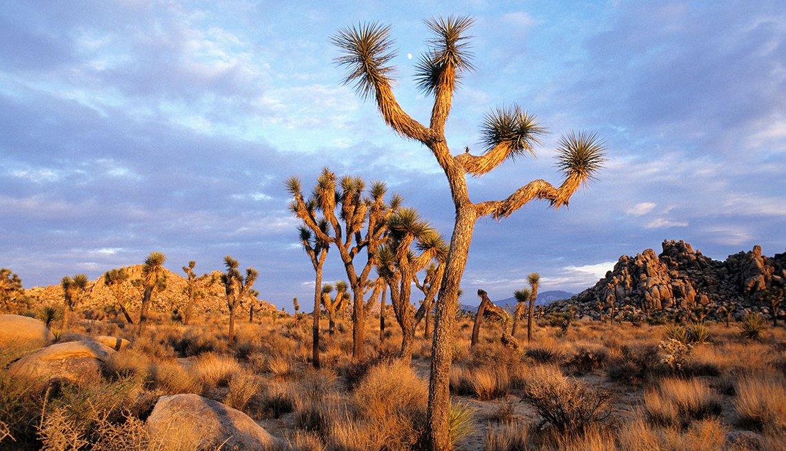 Palm Springs, California - Lugares baratos donde viajar