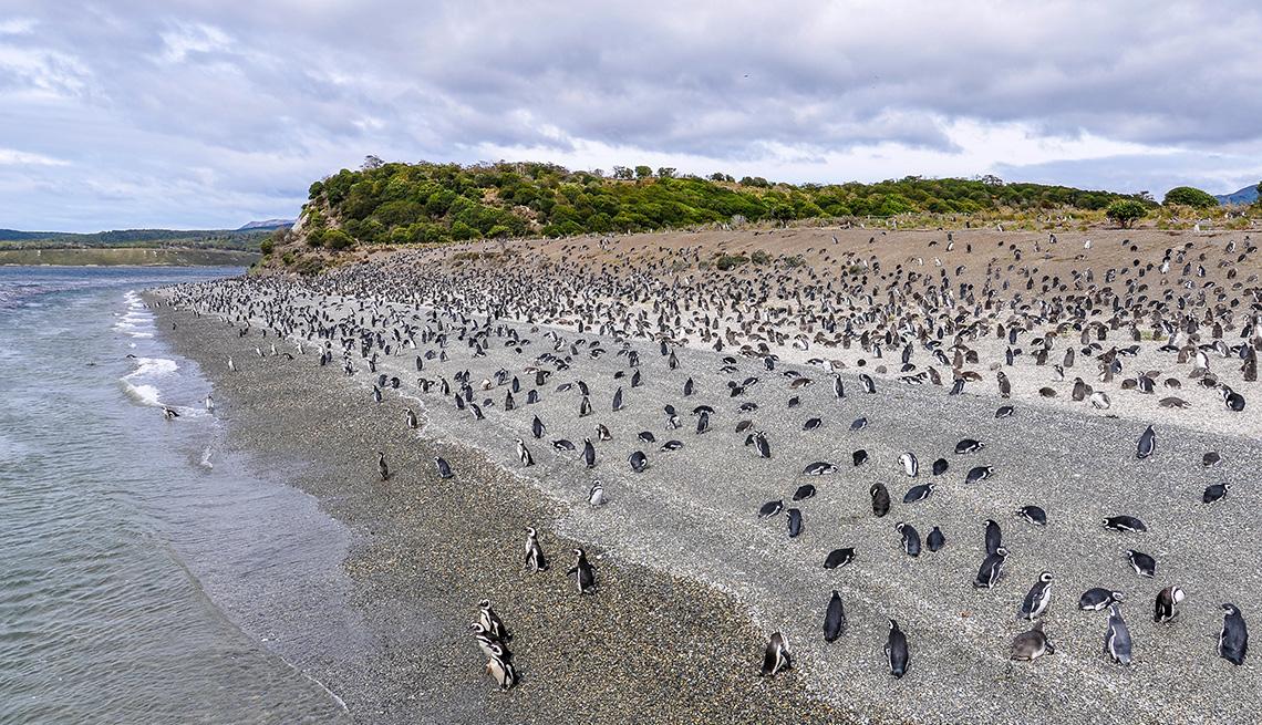 item 15 of Gallery image - Isla Pinguinos, Ushuaia, Argentina