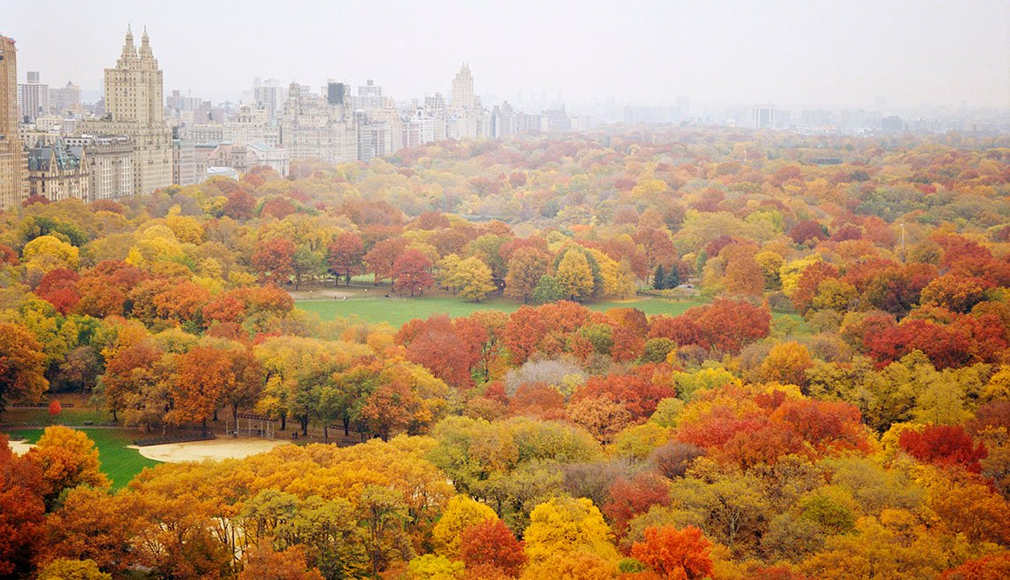 Aerial View Of The Colorful Autumn Leaves On The Trees In Central Park In New York City, Free USA Destinations