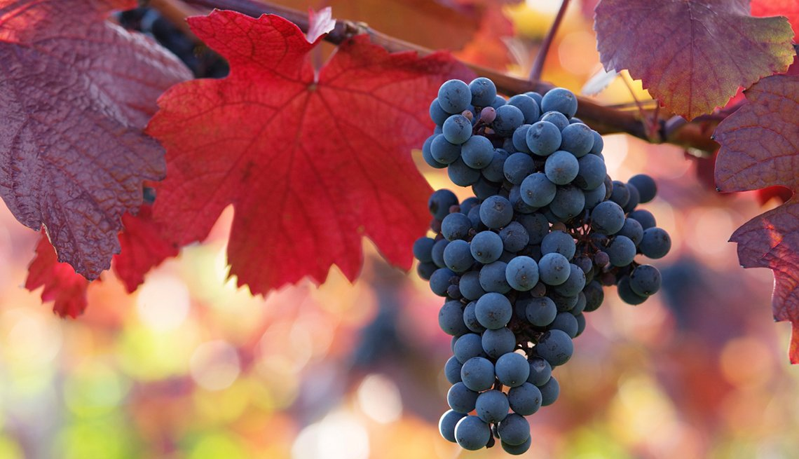 Wine Grapes, Red Leaves, isit These Wineries Outside California