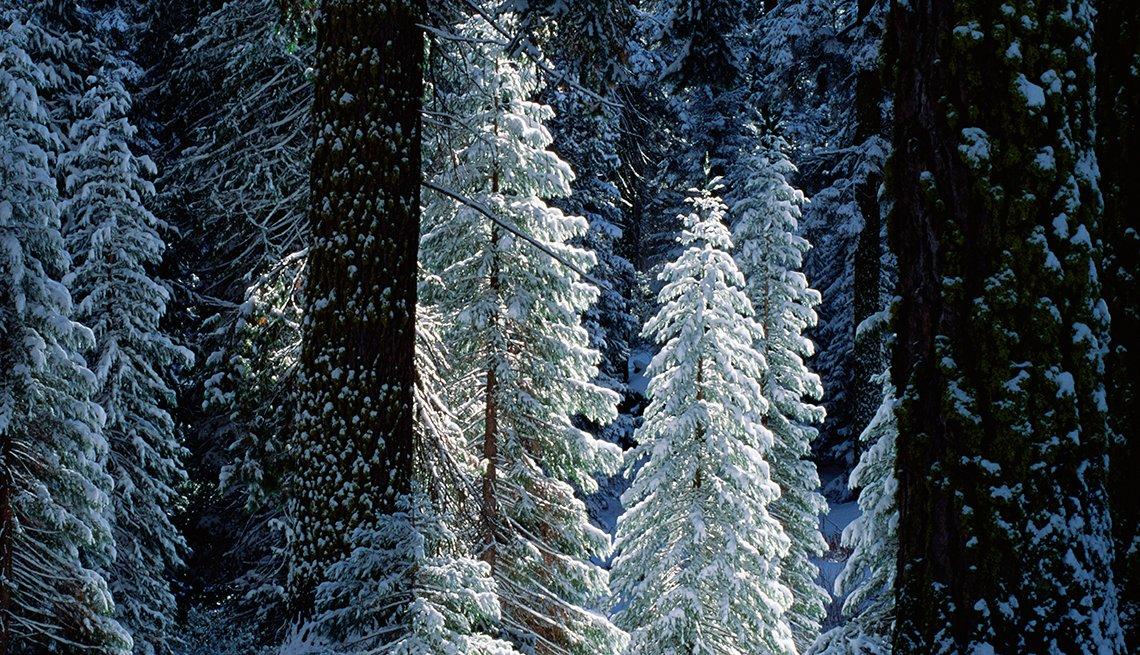 Árbol de Navidad del Parque Kings Canyon, California