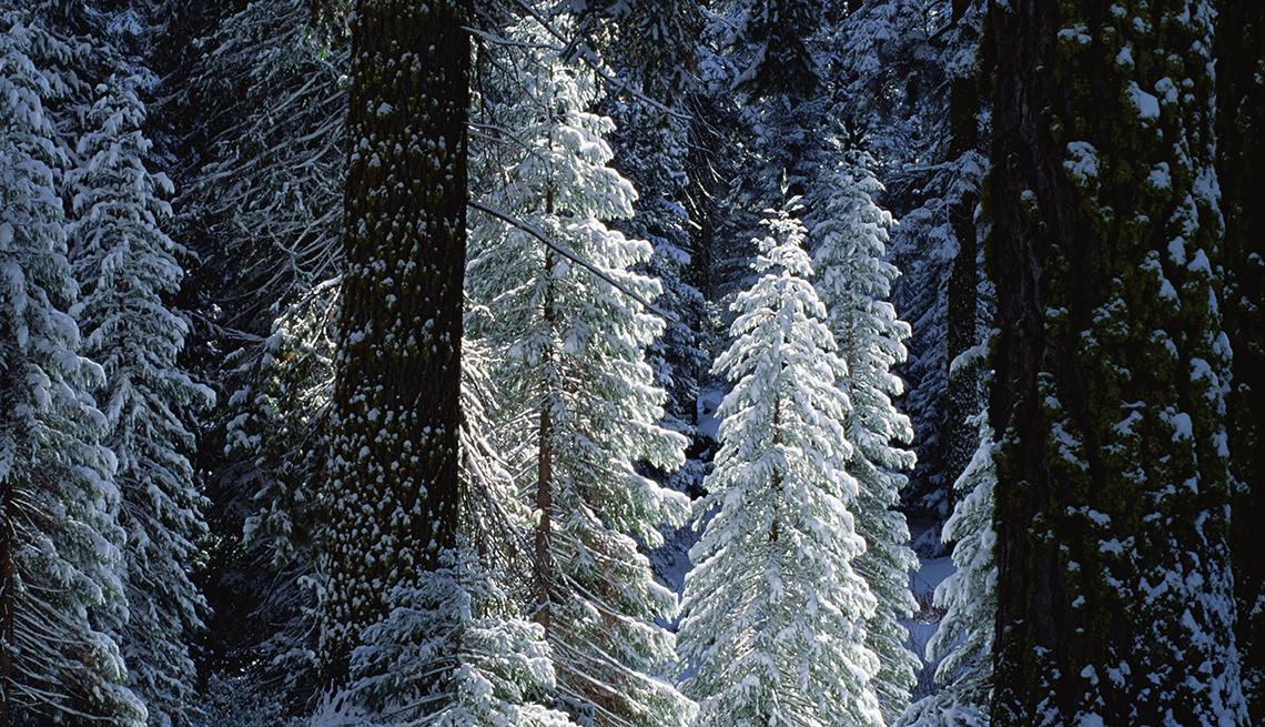 item 7 of Gallery image - Árbol de Navidad del Parque Kings Canyon, California