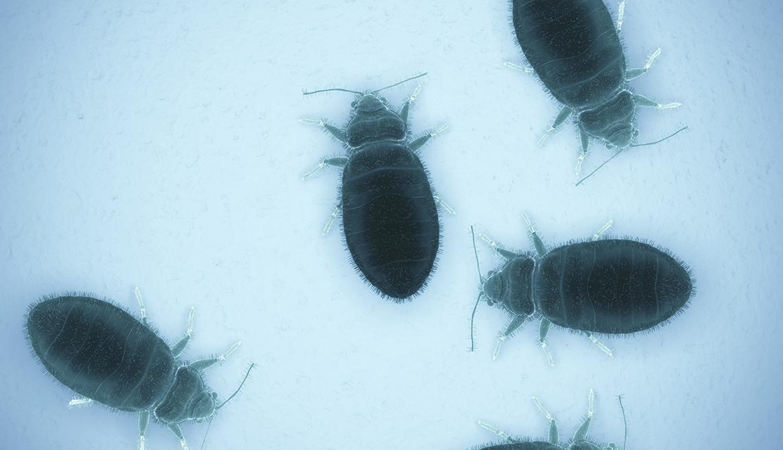 Busca Un Experto en Control de Plagas