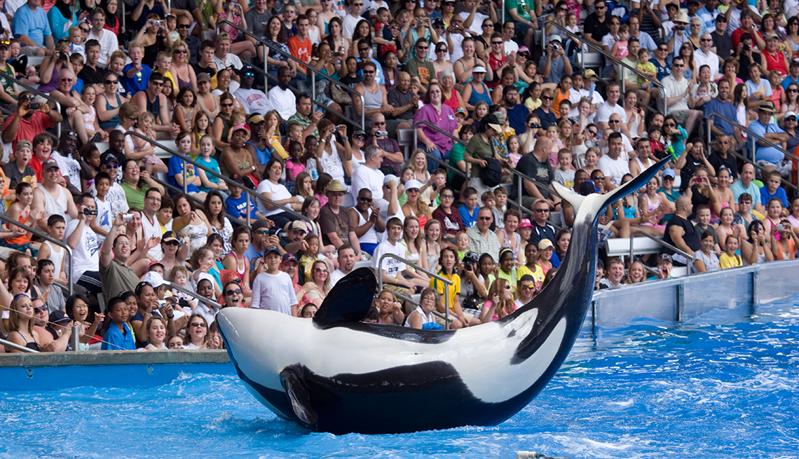 item 7 of Gallery image - Killer whale performance at SeaWorld in Orlando, Florida, Multigenerational Family Vacation Planning, Travel