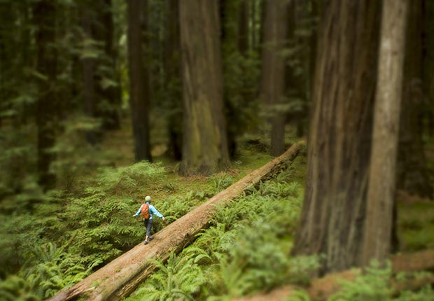 AARP and Frommers: America's top 10 natural wonders - Redwood Coast