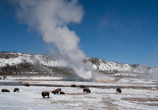 Parque nacional Yellowstone, Wyoming - 10 Viajes econónicos para el 2013