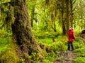 Mujer en un bosque, selva tropical de Hoh, Olympic National Park, Washington