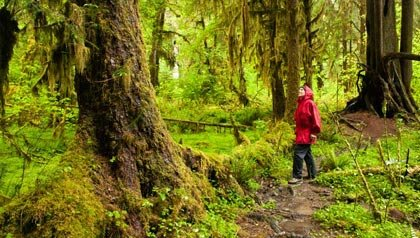 Mujer en un bosque, selva tropical de Hoh, Olympic National Park, Washington