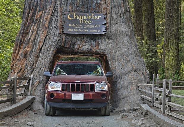 Una camioneta pasa por un árbol sequoia SUV a través de un árbol en el Chandelier Drive-Thru Park en California - 7 Rutas clásicas para pasear en America