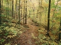 Trail in Rock Creek Park. Six places to experience urban wilderness. (H Anderson/Age Fotostock)