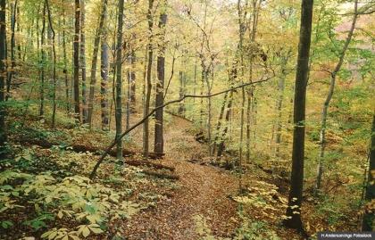 Trail en Rock Creek Park. Seis lugares para experimentar desierto urbano.
